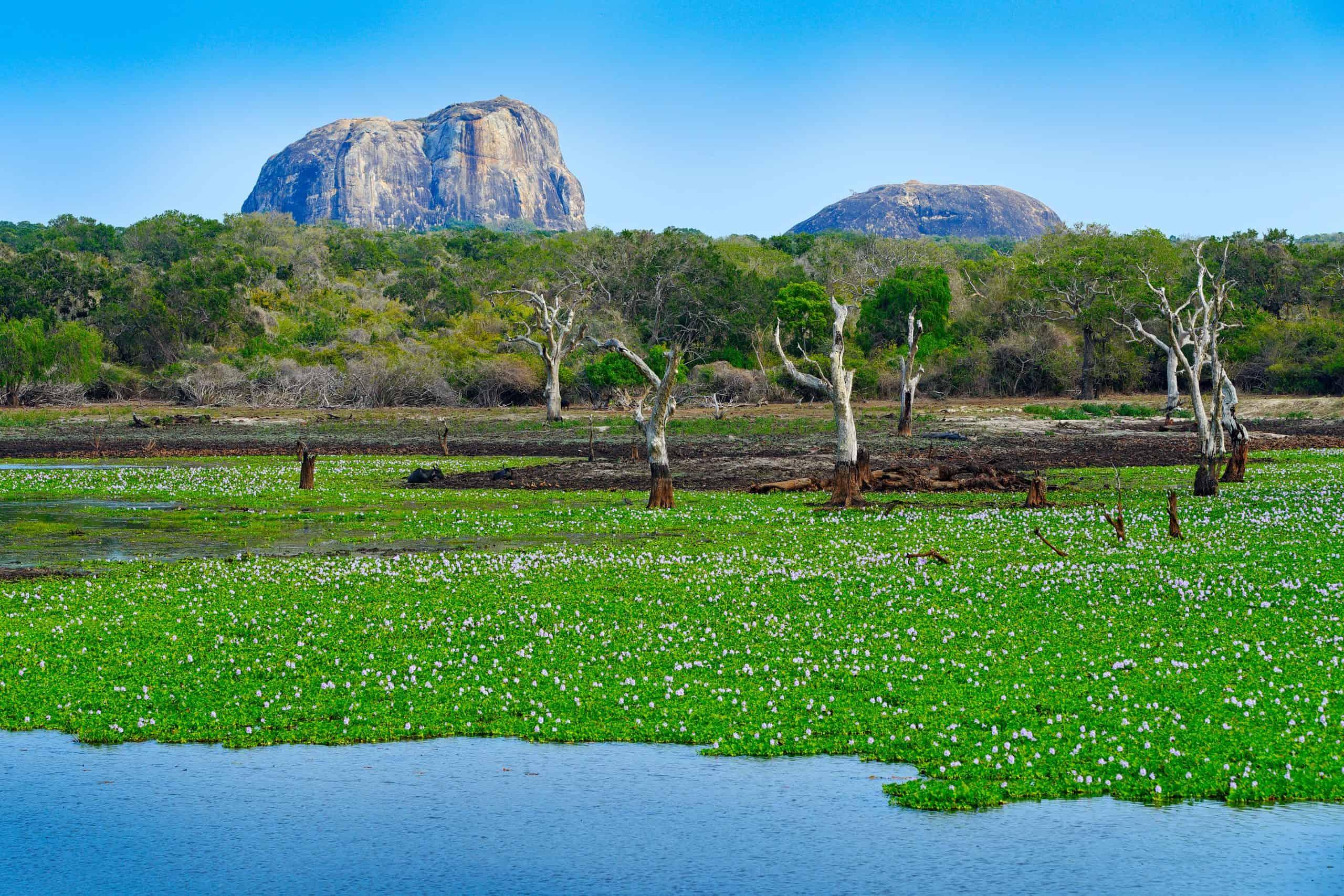 Yala National Park Shutterstock 589428650