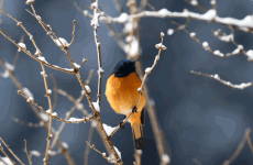 18-Day Bird Watching and Wildlife in Western Sichuan