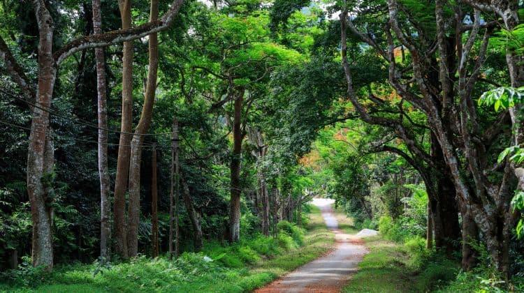Explore Cuc Phuong National Park Full Day Tour 2 30917 1510029029