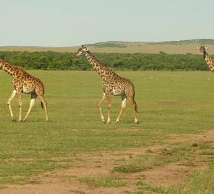 7 Days Masai Mara, Naivasha and Amboseli Safari