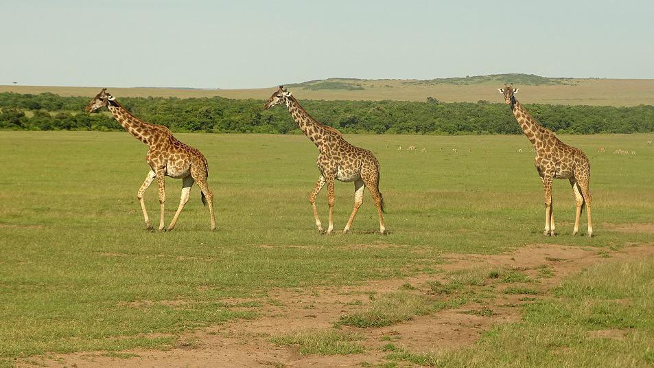 Game Veiw Safari Mara