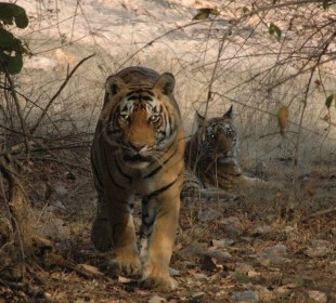 India's Golden Triangle with Bird & Tiger Safari
