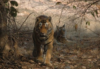 India's Golden Triangle with Bird & Tiger Safari