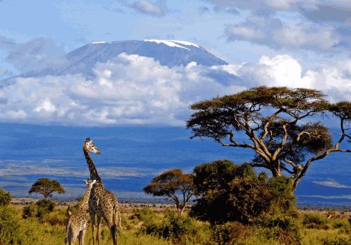 Kilimanjaro Climbing @burigi Chato Safaris (11)