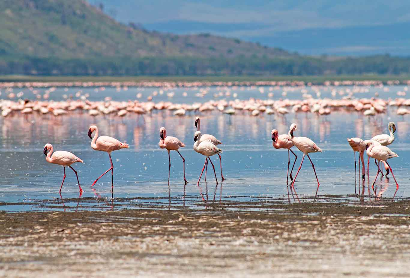 Lake Nakuru National Park1