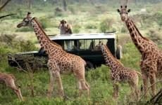 3 Days Heart of Masai Mara Safari