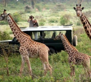 3 Days Heart of Masai Mara Safari