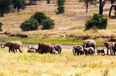4-Day Tarangire, Serengeti & Ngorongoro Crater Safari