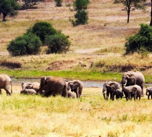 4-Day Tarangire, Serengeti & Ngorongoro Crater Safari