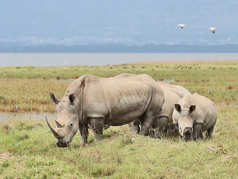 Tsavo Amboseli Tsavo