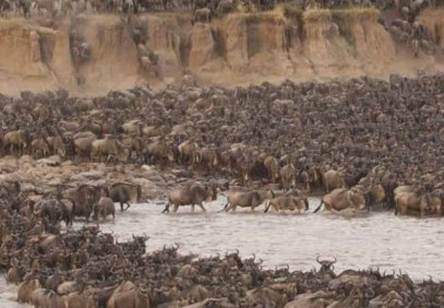 7-Day Great Serengeti Wildebeest Migration
