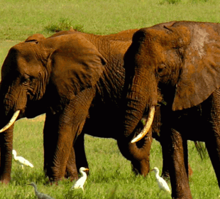 2 Days Tanzania Camping Safari to Tarangire and Ngorongoro