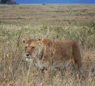 4 Days Lake Manyara, Serengeti & Ngorongoro Crater
