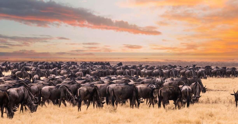 30 31 Kenya Migration