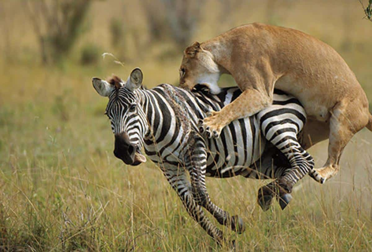 5 Things To Do When You Visit Masai Mara National Reserve