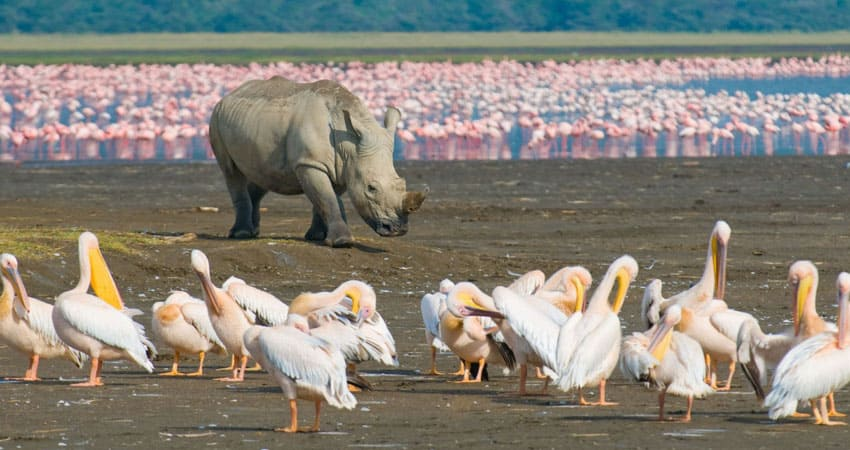 5 Days Masai Mara Lake Nakuru Lake Naivasha Camping Safari