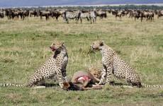 5-Day Kenyan Wildlife Safari