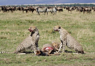 5-Day Kenyan Wildlife Safari