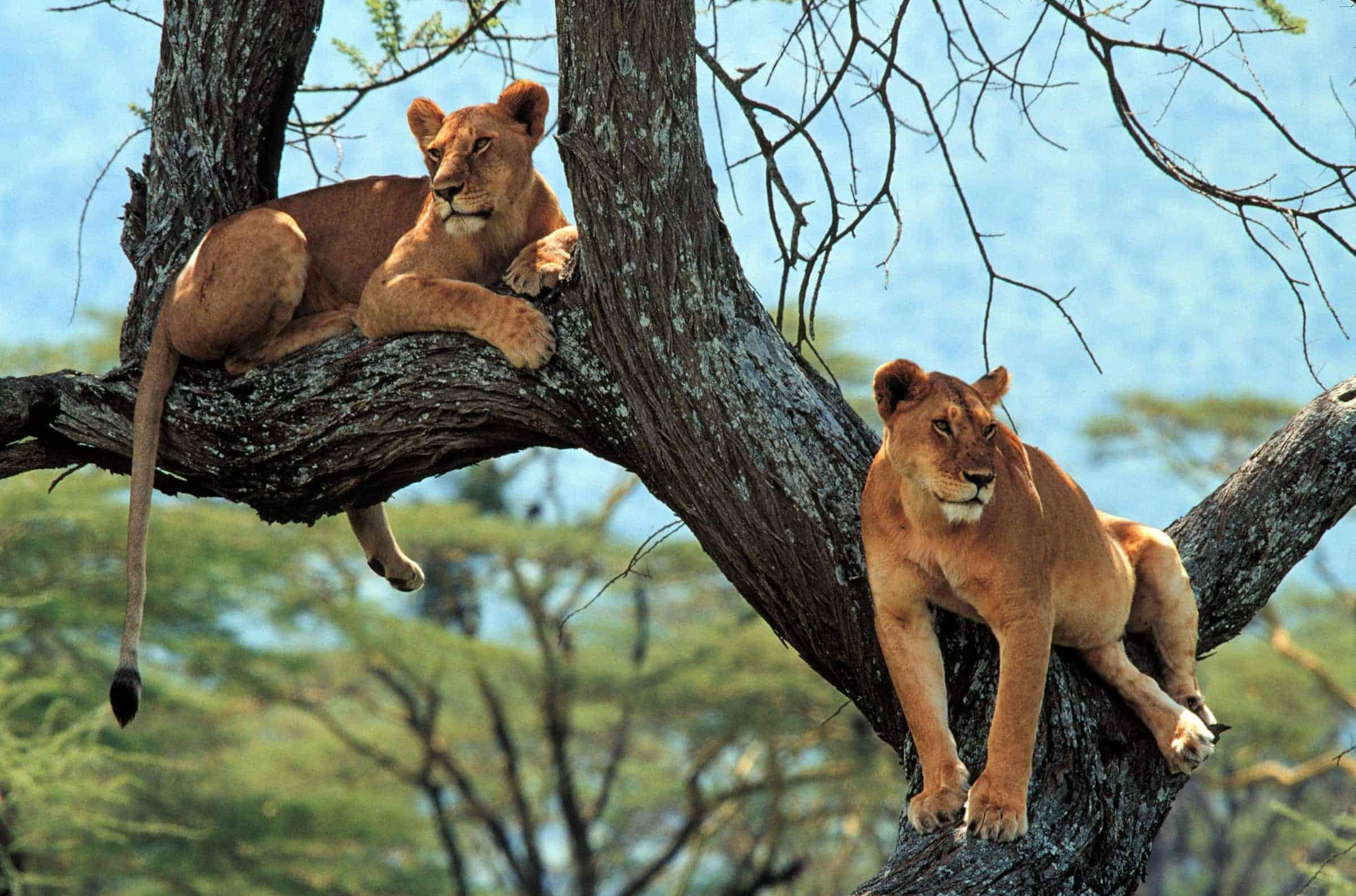 7days Tanzania Adventures