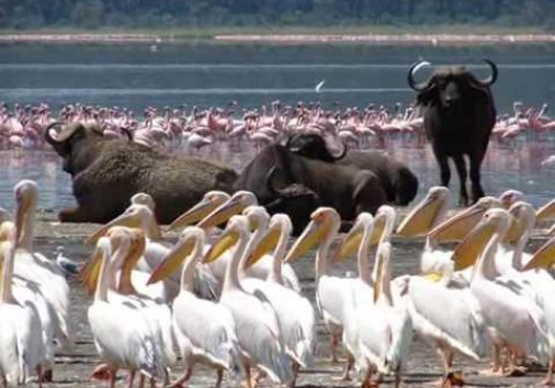 African Victory Safaris Manyara National Park