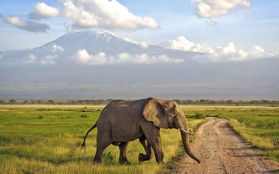 Amboseli 1