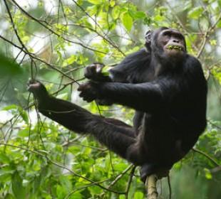 10-Day Best of Rwanda Safari
