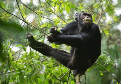 10-Day Best of Rwanda Safari