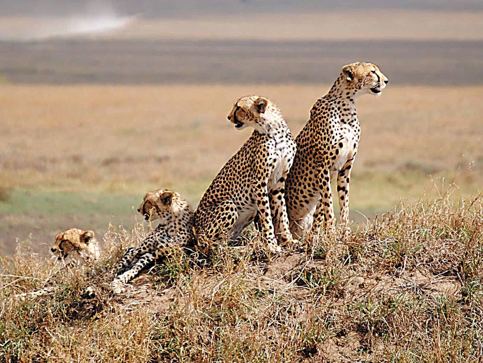 Day 4 Serengeti National Park