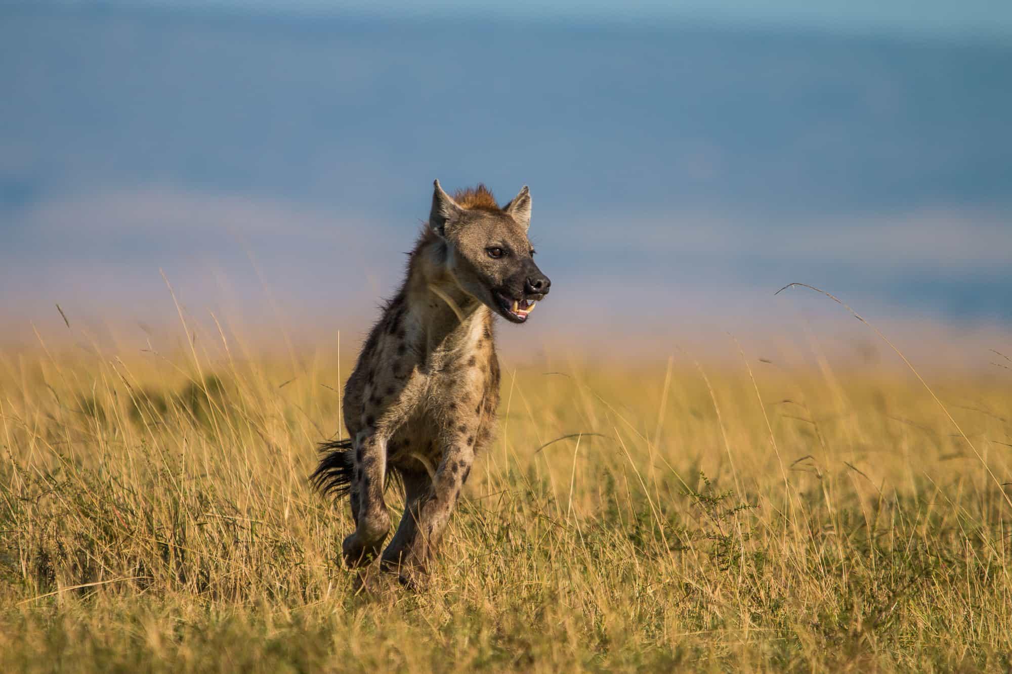 Earthwatch Maasai Mara 2018 Copyright Anthony Ochieng 105 1