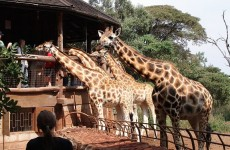 1-Day Nairobi National Park Safari