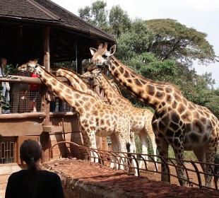 1-Day Nairobi National Park Safari