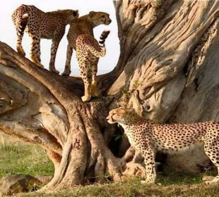 2 Days Tarangire & Ngorongoro Crater Safari