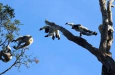 14-Day Madagascar Highlight Tour