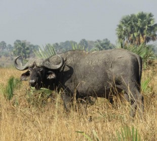 7-Day Exploration of Kidepo and Murchison Falls