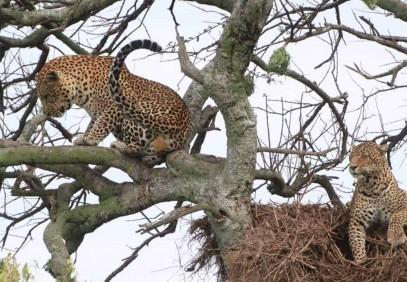 4-Day Tanzania Safari for Charity