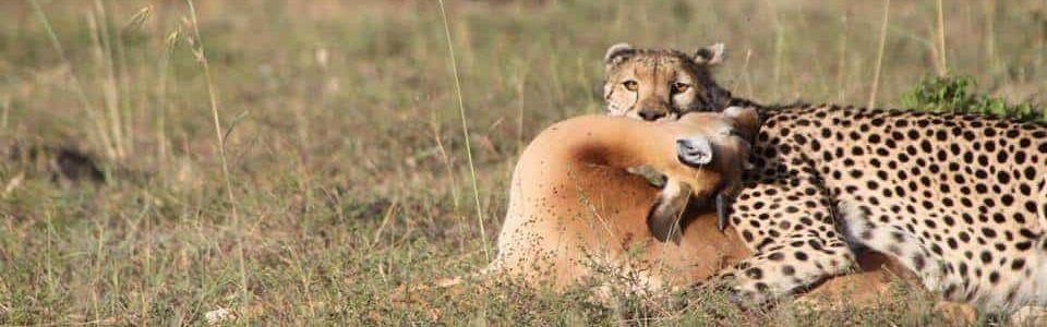 Safari serengeti tarangire ngorongoro and manyara