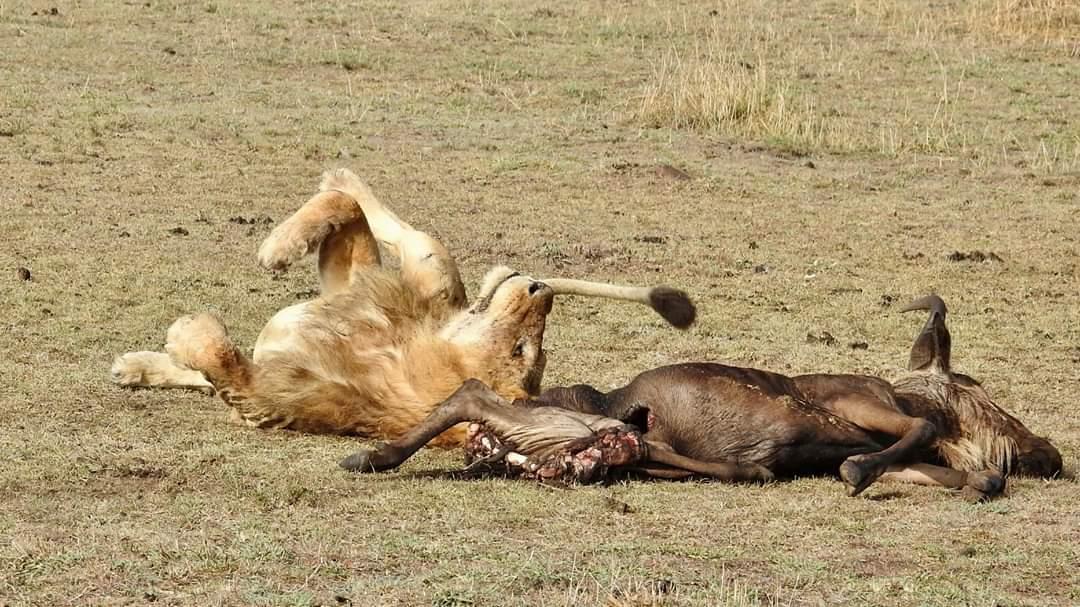 Safari to Serengeti for charity