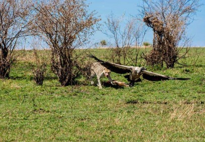 5 Days Tarangire, Serengeti, Ngorongoro Crater and Lake Manyara