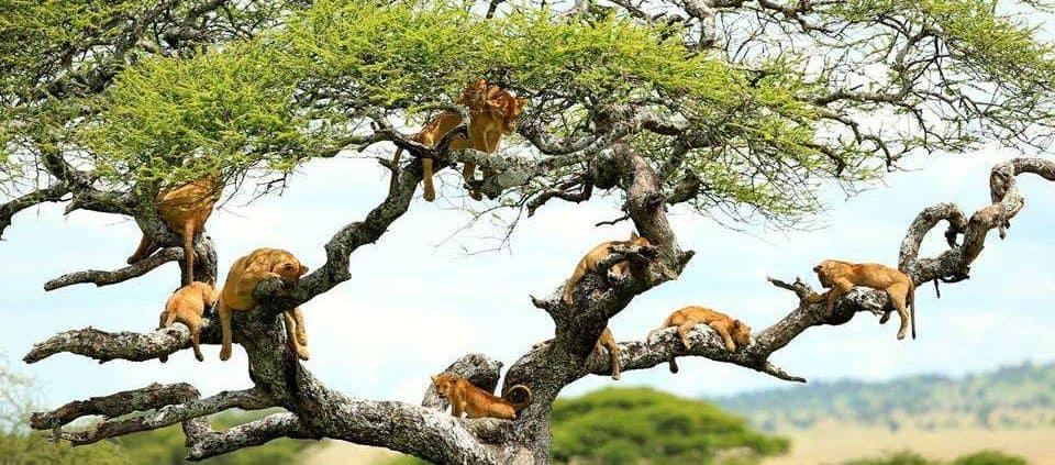 Lake Manyara National Park 1 960x423