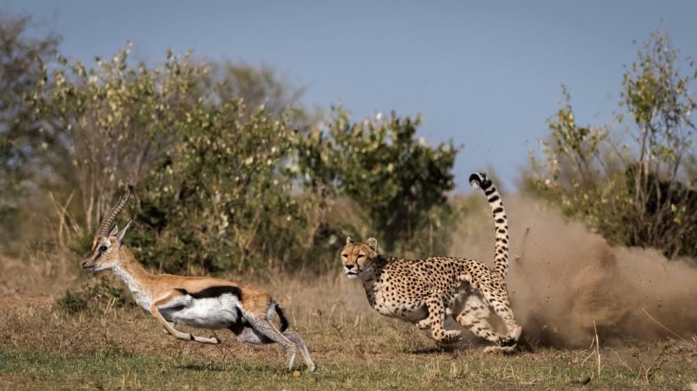 Lake Manyara Wildlife Rr Afrozone Kingdom Safaris