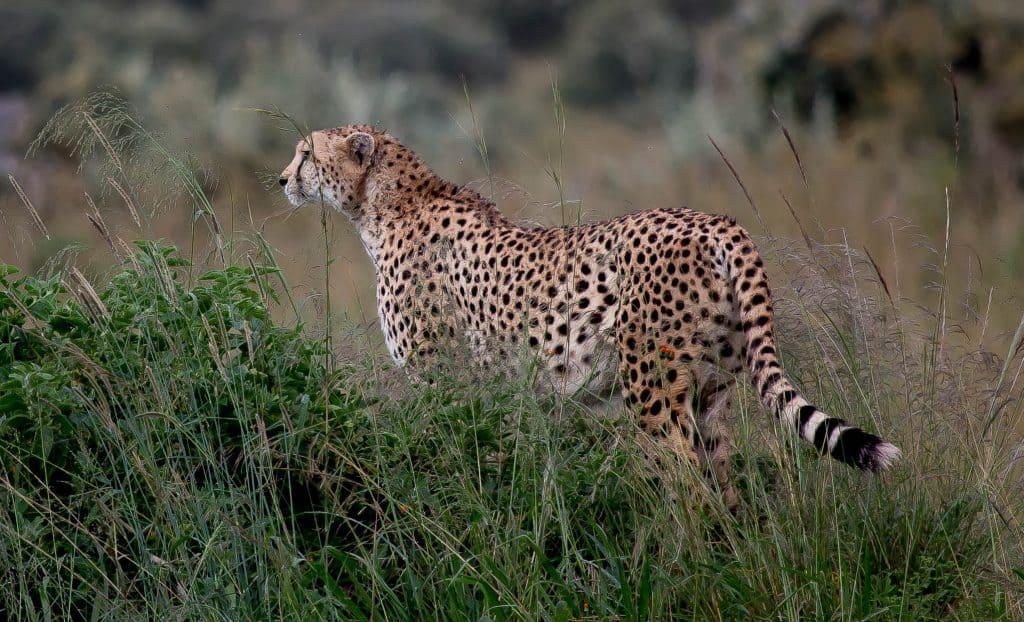 Masai Mara 03 1024x622