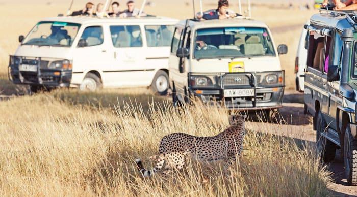 Maasai Mara Gamedrive