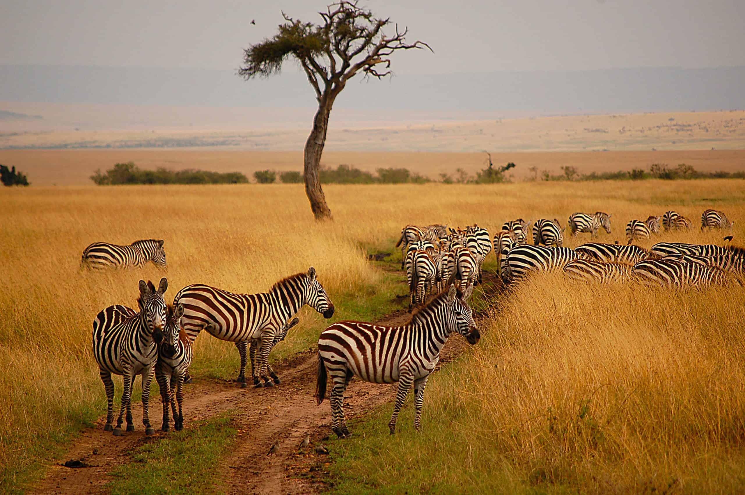 Maasai.mara .national.reserve.original.9854
