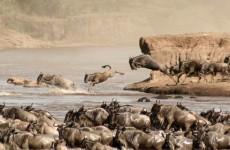6 Days Masai Mara, Lake Nakuru, Amboseli Safari
