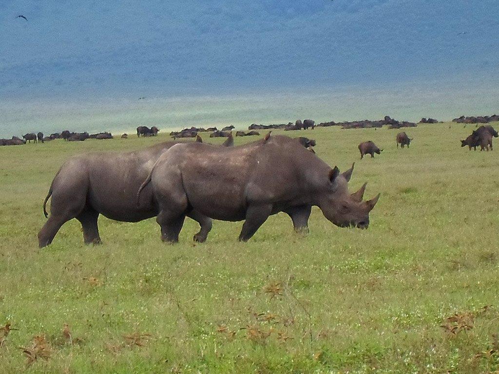 Maiko George Safari Pics Feb 2014 0008 Layer 1