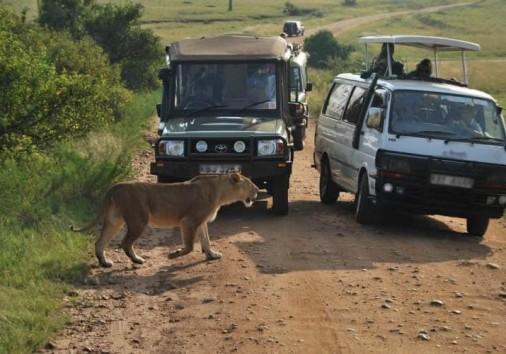 Mara Tours