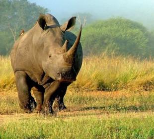 7-Day Magical Kenya Camping Safari
