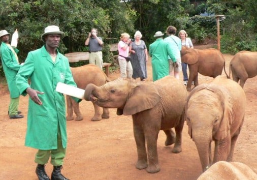 Sheldrick Elephant Orphanage