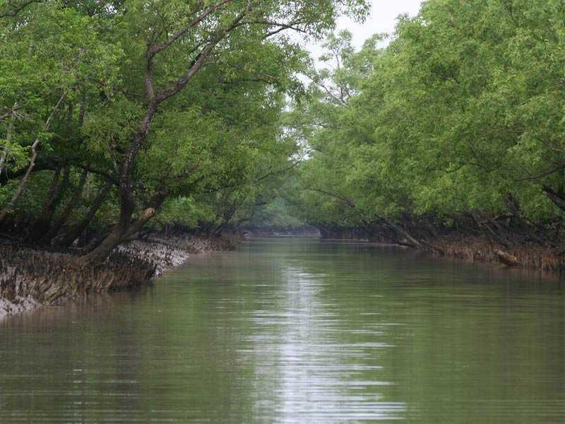 Sundarban 1