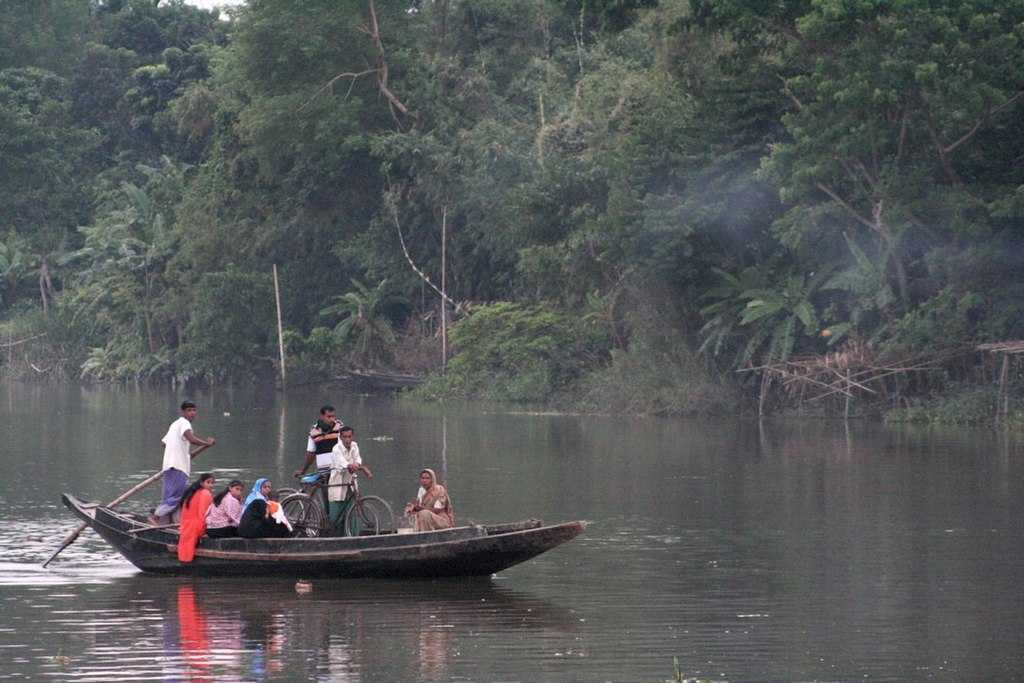 Sundarban 2